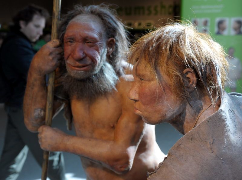 The reconstruction of a Neanderthal woman (R) and man (L) pictured at the Neanderthal Museum of Mettmann, Germany, 20 March 2009. As spring is here, the Neanderthal man gets company of a woman - red-haired and in her twenties - who wears her most beautiful summer dress. For the time being, the exact reconstruction of a Neanderthal woman will join the male conspecifics in the museum. Photo: FEDERICO GAMBARINI