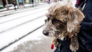 Budapest, 2017. január 12. Egy kutya gazdája ölében Budapesten a havazás után 2017. január 12-én. MTI Fotó: Balogh Zoltán