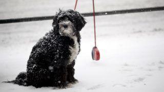 Budapest, 2012. február 4. Egy kutya áll a behavazott Budapesten, a Szent István körúton. MTI Fotó: Mohai Balázs