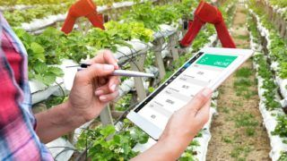 Smart agriculture, vertical farm , sensor technology concept. Farmer hand using tablet for monitoring temperature , humidity , pressure and light of soil in strawberry farm and control ai robot arm.