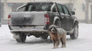 Nevrokopi, 2018. február 26. Hóesésben egy kutya az észak-görögországi Nevrokopi faluban 2018. február 26-án. (MTI/EPA/Harisz Jordanídisz)