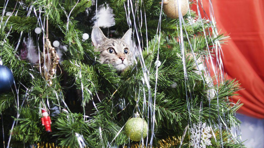 bCat on Christmas tree. Naughty cute kitten. New Year