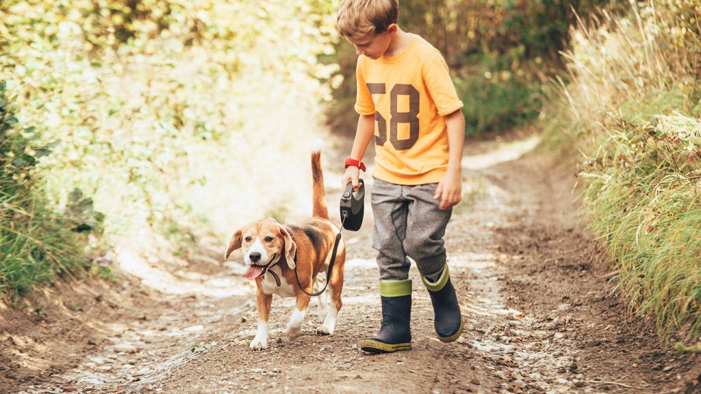 Boy walks with his beagle dog on the country road