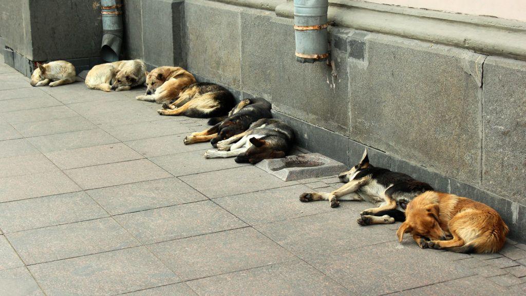 Stray dogs sleeping on a sidewalk