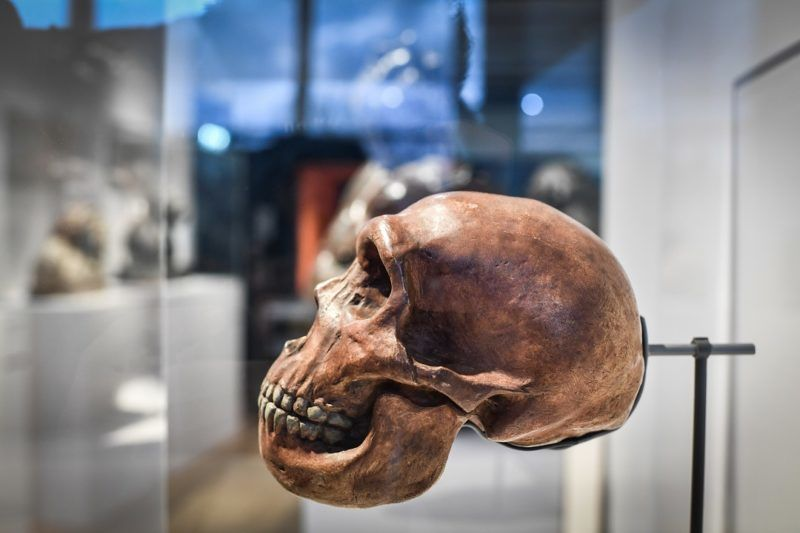 A skull is displayed as part of the Neanderthal exhibition at the Musee de l'Homme in Paris on March 26, 2018. (Photo by STEPHANE DE SAKUTIN / AFP)