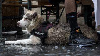 Budapest, 2018. június 10. A szakadó esõ elõl egy pad aló bebújt kutya a 11. Judafest fesztiválon a budapesti Kazinczy utcában 2018. június 10-én. Nyitott zsinagóga, városi séták, százéves fotók és utcafesztivál - koncertek, gyerekprogramok, piac - várta az érdeklõdõket az idei Judafesten, a Kazinczy utcában és környékén június 7. és 10. között. MTI Fotó: Mónus Márton