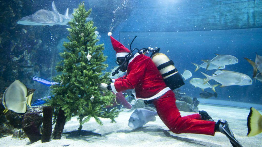 Budapest, 2018. december 6. Mikulásjelmezbe öltözött búvár díszít egy karácsonyfát a budapesti Tropicarium akváriumában 2018. december 6-án. MTI/Mohai Balázs