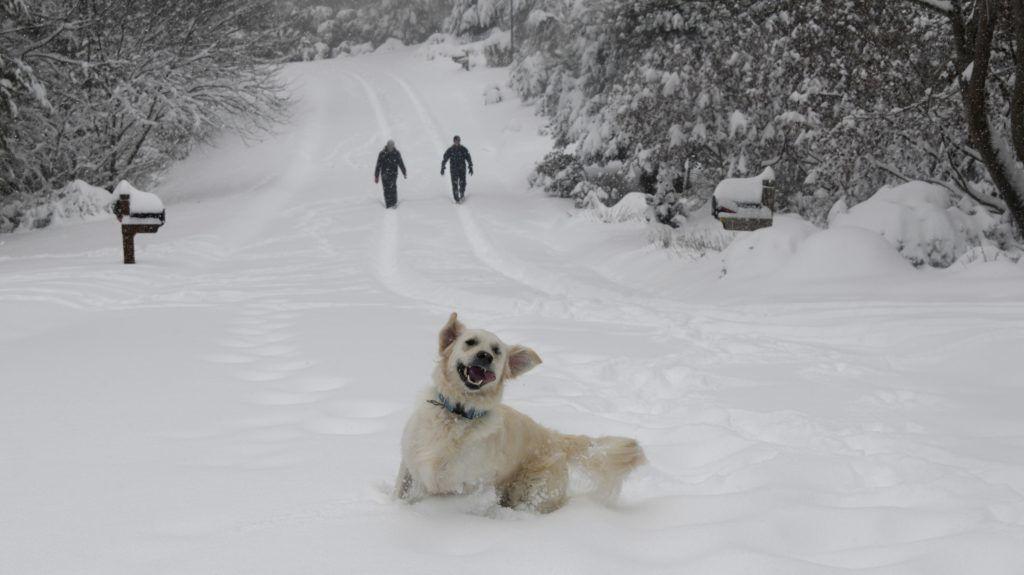 Jön a havazás, estére kifehéredhet a táj