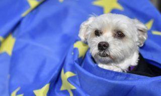 London, 2018. október 7. EU-zászlóba bugyolált öleb a brit EU-tagság megszûnését (Brexit) ellenzõ kutyás tiltakozó megmozduláson Londonban 2018. október 7-én. (MTI/EPA/Neil Hall)