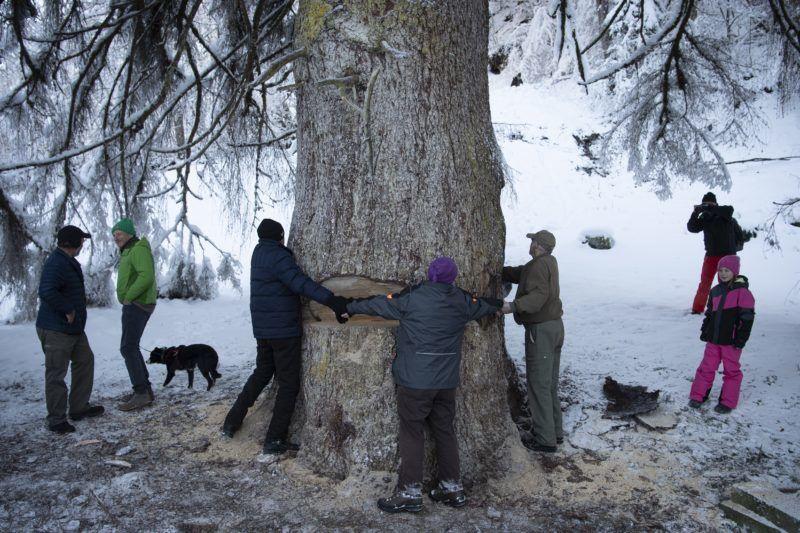 Zürich, 2018. december 12. Svájc legmagasabb, La Panera néven ismert fenyõfáját állják körül, mielõtt kidöntik a hatalmas fát a Graubünden kantonbeli Luven közelében 2018. december 12-én. A 48 méter magas, 260 évesnek becsült fenyõt kártevõ támadta meg, ezért pusztulásra volt ítélve. MTI/EPA/KEYSTONE/Gian Ehrenzeller