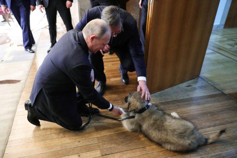 Serbian President Aleksandar Vucic presents a Yugoslavian shepherd dog puppy to his Russian counterpart Vladimir Putin in Belgrade on January 17, 2019. (Photo by Mikhail KLIMENTYEV / SPUTNIK / AFP)