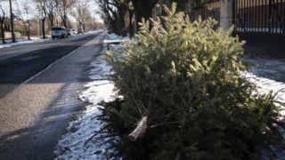 Budapest, 2017. január 15. Egy kidobott karácsonyfa hever az út szélén, Budapest  XXII. kerületében az Ady Endre úton. MTVA/Bizományosi: Turbéky Eszter  *************************** Kedves Felhasználó! Ez a fotó nem a Duna Médiaszolgáltató Zrt./MTI által készített és kiadott fényképfelvétel, így harmadik személy által támasztott bárminemû – különösen szerzõi jogi, szomszédos jogi és személyiségi jogi – igényért a fotó készítõje közvetlenül maga áll helyt, az MTVA felelõssége e körben kizárt.