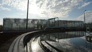 Budapest, 2012. november 29.Növényekkel betelepített, fedett tisztító medence a Fővárosi Csatornázási Művek dél-pesti telepén, ahol felavatták a telep új, úgynevezett élőgép technológiájú rendszerét 2012. november 29-én.MTI Fotó: Kovács Tamás