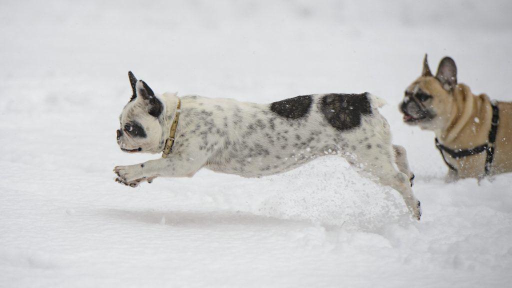 Salgótarján, 2019. január 5. Kutyák szaladnak a hóesésben Salgótarjánban 2019. január 5-én. MTI/Komka Peter