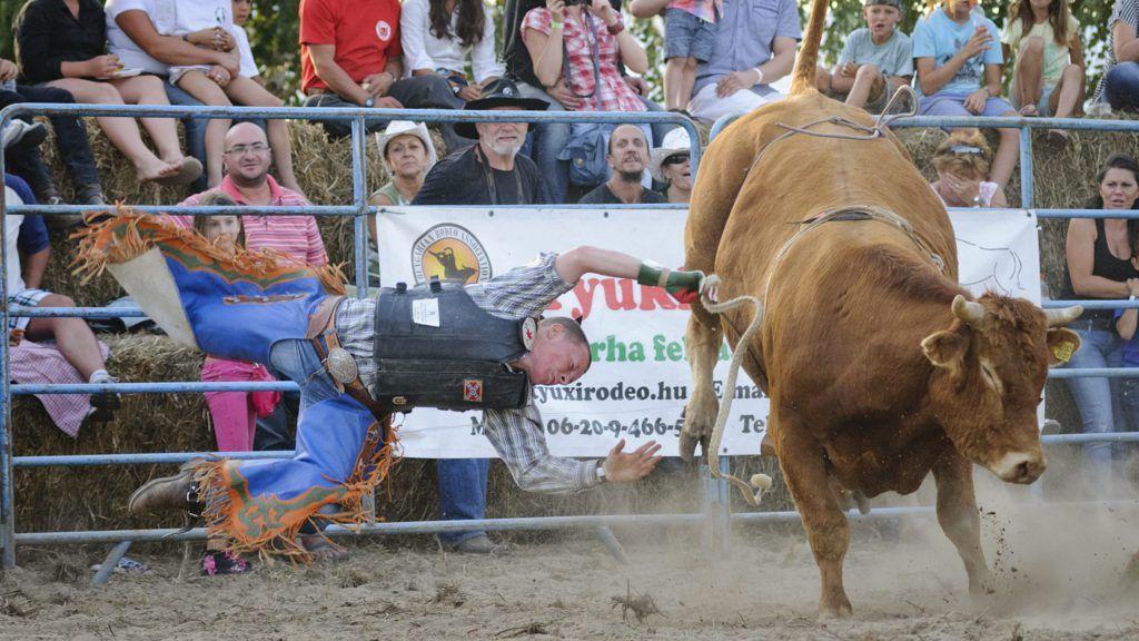 Nyíradony, 2012. augusztus 18. Szimhardt Dávid esik le a Suffering nevû bikáról a Nyíradony-Tamáspusztai TB-Ranch-en megrendezett Western Show és Bikarodeó rendezvényen 2012. augusztus 18-án. MTI Fotó: Czeglédi Zsolt
