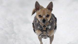 Bécs, 2013. január 17. Kutya játszik egy behavazott parkban Bécsben 2013. január 17-én, amikor 30 centiméternél is több hó hullott Ausztria keleti térségében. (MTI/EPA/Georgh Hochmuth)