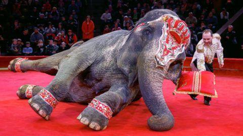 Kijev, 2018. január 25. Belush Takach egy elefánttal lép fel az Ukrán Nemzeti Cirkusz elõadásán Kijevben 2018. január 25-én. (MTI/EPA/Szerhij Dolzsenko)