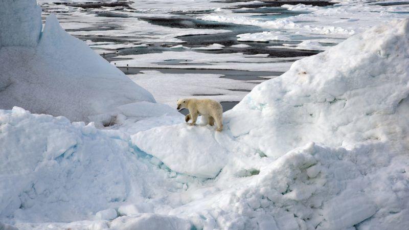 FILED - 14 August 2015, ---, -: A polar bear stands on an iceberg in the Arctic Ocean. Photo: Ulf Mauder/dpa