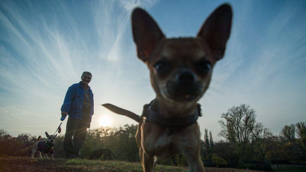 Budapest, 2018. november 9. Kutyákat sétáltató férfi Budapesten, a Városligetben 2018. november 9-én. MTI/Balogh Zoltán