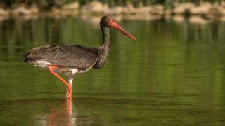 Polish birds on beautiful backgrounds