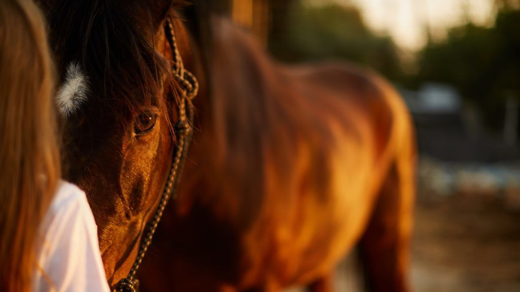 The girl looks into the eyes of a beautiful horse