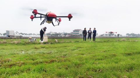 Drones are remote-controlled to crop-dust a wheat field in Xinjucheng village, Shanxiahu town, Zhuji city, east China's Zhejiang province, 26 February 2019.  A sharp increasing number of Chinese farmers are turning to drones to crop-dust their farmland due to labor shortate. The number of drones deployed for crop-dusting in China has skyrocketed from only 500 in 2014 to more than 14,000 in 2017, according to the data from China's Ministry of Agriculture and Rural Affairs. Utilizing drones to disperse pesticides is believed to be more efficient and safer than the conventional method of crop spraying, cutting down water consumption by 90 percent, pesticide volume by 40 percent and boosting productivity 50 times over. China is home to more than 300 million people working in the agricultural sector, which has spawned an estimated multi-billion yuan business for the country's drone manufacturers.
