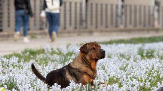 Berlin, 2019. március 20. Nyíló tavaszi virágok között játszik kutyájával egy nõ a Spree folyó partján, Berlinben 2019. március 20-án. Csillagászati értelemben idén ez a tavasz elsõ napja, a tavaszi napéjegyenlõség ideje, amikor a Nap az egyenlítõ felett delel. Csillagászok kiszámolták, hogy a napéjegyenlõség legközelebb csak 2102-ben esik ismét március 21-re. MTI/EPA/Hayoung Jeon