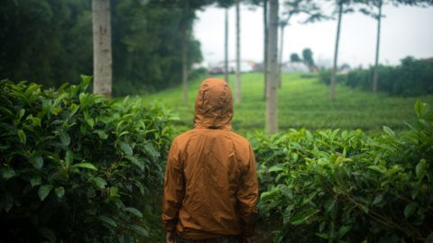 traveling in any weather, a man view from the back in tea plantations of Asia