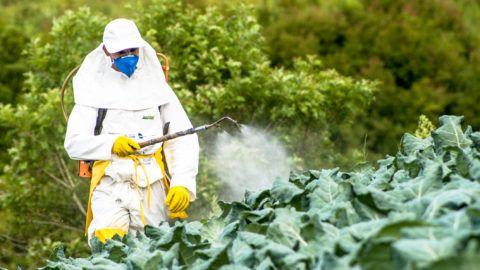 Capao Bonito, Sao Paulo, Brazil, December 18, 2009. Farmer with manual pesticide sprayer on cabbage field in Sao Paulo state