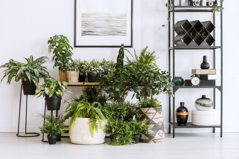 Houseplants on the floor and table standing next to metal shelf with decorations