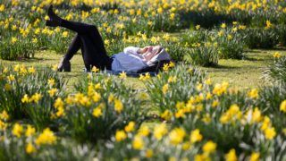 London, 2019. február 26. Virágba borult nárciszok között napozik egy nõ a londoni St James parkban 2019. február 25-én. Nagy-Britanniában elõször mértek 20 Celsius-fok feletti hõmérsékletet február 25-én. MTI/EPA/Vickie Flores