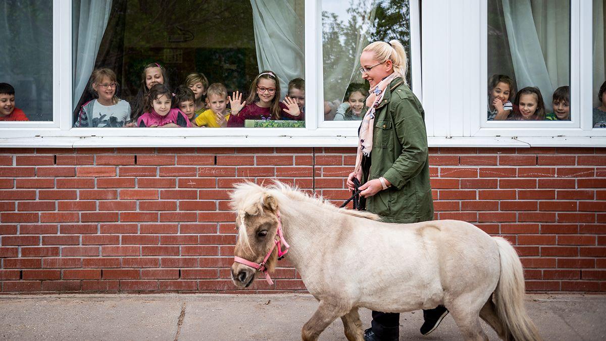 ló lányok tudják,)
