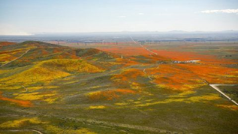 View from a NASA aircraft, TG-14, over the Superbloom of wildflowers and poppies from the Antelope Valley in Southern California, Poppy Reserve and solar panels are in the background.