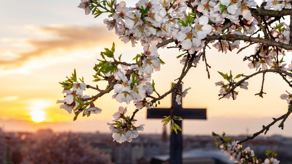 Budapest, 2019. március 26. Mandulafa (Prunus dulcis) virágai a Gellért-hegy tetején. MTVA/Bizományosi: Juhász Gábor  *************************** Kedves Felhasználó! Ez a fotó nem a Duna Médiaszolgáltató Zrt./MTI által készített és kiadott fényképfelvétel, így harmadik személy által támasztott bárminemû – különösen szerzõi jogi, szomszédos jogi és személyiségi jogi – igényért a fotó készítõje közvetlenül maga áll helyt, az MTVA felelõssége e körben kizárt.