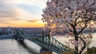 Budapest, 2019. március 26. Virágzó mandulafa (Prunus dulcis) a Gellért-hegyen, háttérben a Szabadság híd. MTVA/Bizományosi: Juhász Gábor  *************************** Kedves Felhasználó! Ez a fotó nem a Duna Médiaszolgáltató Zrt./MTI által készített és kiadott fényképfelvétel, így harmadik személy által támasztott bárminemû – különösen szerzõi jogi, szomszédos jogi és személyiségi jogi – igényért a fotó készítõje közvetlenül maga áll helyt, az MTVA felelõssége e körben kizárt.