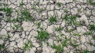 Sáp, 2019. április 4. Kiszáradt, repedezett termõföld Sáp közelében 2019. április 4-én. A Nemzeti Agrárgazdasági Kamara korábbi közlése szerint akár százmilliárdos nagyságrendû bevételkiesést is okozhat az aszály a magyar gazdáknak. Az országos aszályhelyzet miatt a kormányzat az idei évtõl meghosszabbítja a mezõgazdasági vízhasznosítási idényt, amelyben a gazdák kedvezményesen juthatnak öntözõvízhez. MTI/Czeglédi Zsolt