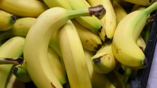 Many bananas in a black plastic crate on a table with a white tablecloth on November 10th, 2018.