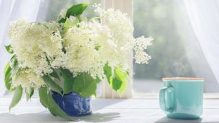 Elder flowers and cup of hot coffee by the sunlight window in the morning