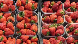 Budapest, 2013. február 28.Friss földieper a Központi Vásárcsarnok (ismertebb nevén Nagycsarnok) egyik zöldség és gyümölcs standjánál.MTVA/Bizományosi: Nagy Zoltán ***************************Kedves Felhasználó!Az Ön által most kiválasztott fénykép nem képezi az MTI fotókiadásának, valamint az MTVA fotóarchívumának szerves részét. A kép tartalmáért és a szövegért a fotó készítője vállalja a felelősséget.