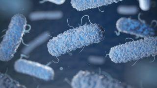 Enterobacterias. Gram-negative bacterias escherichia coli, salmonella, klebsiella, legionella, mycobacterium tuberculosis, yersinia pestis,  and shigella, proteus, enterobacter, serratia, and citrobacter. 3d illustration