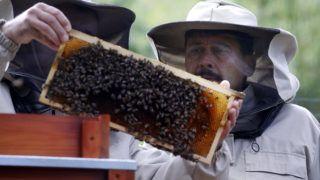 Sopron, 2019. május 7. Áder János köztársasági elnök (j) a méhek életét tanulmányozó biomonitoring-rendszerrel ismerkedik a Soproni Egyetemen, miután elõadást tartott a klímaváltozásról 2019. május 7-én. MTI/Koszticsák Szilárd