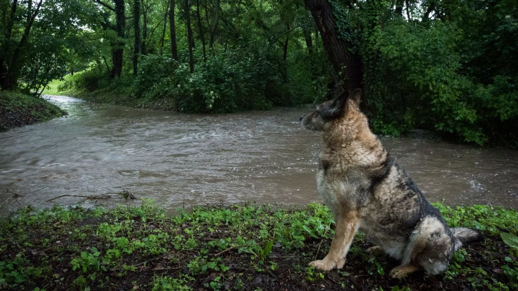 Szentendre, 2019. május 30. Kutya ül a napok óta tartó esõs idõjárás miatt megáradt Bükkös-patak partján Szentendrén 2019. május 30-án. Több megyében továbbra is zivatarokra, felhõszakadásra figyelmeztet az Országos Meteorológiai Szolgálat. MTI/Cseke Csilla