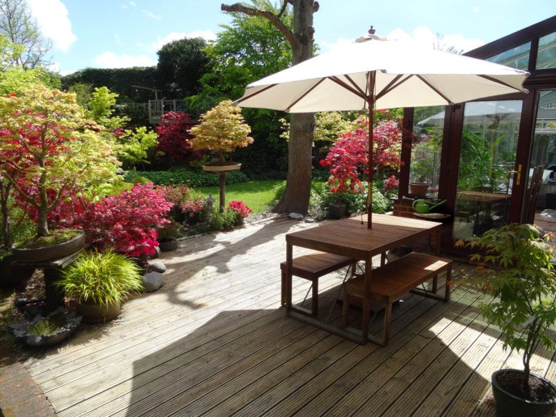 Photo showing a contemporary style Japanese garden, with a large area of timber decking.  A wooden table and benches provide a spot for al fresco dining, being shaded from the sun by a cream parasol umbrella.  The garden also features bonsai trees, bamboo, Japanese maples, grasses and azaleas.