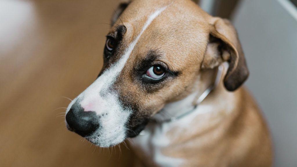 Guilty dog looking at you