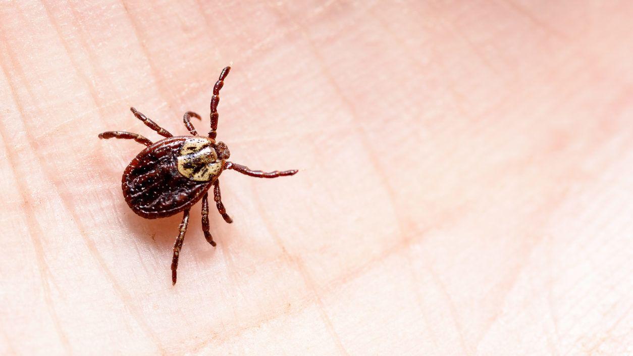 Paraziták a májusi bogarakon. Hozzászólások