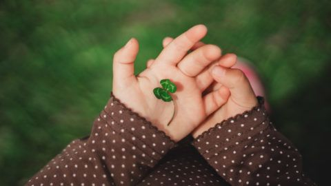 Four leaf green clover in small child's hands of happy young baby girl.