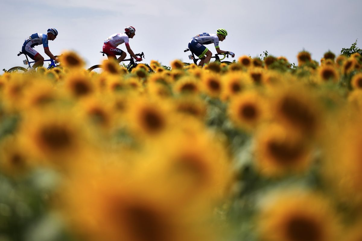 Belgium's Thomas De Gendt, France's Stephane Rossetto and France's Lilian Calmejane ride in a breakaway, with sunflowers in foreground during the eleventh stage of the 106th edition of the Tour de France cycling race between Albi and Toulouse, on July 17, 2019. (Photo by Marco Bertorello / AFP)
