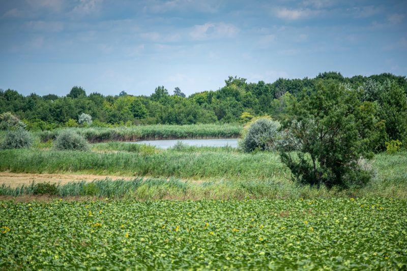 Image: 73910634, A Zichy-tó egy öntözőtóként alkalmazott félig mesterséges tó a Fejér megyei Zichyújfalu külterületén., Place: Budapest, Hungary, Model Release: No or not aplicable, Property Release: Yes, Credit: smagpictures.com