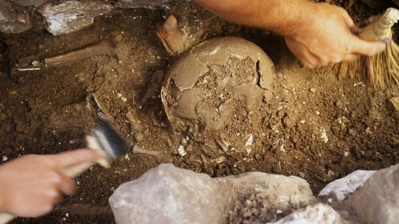archaeology students excavate skull in the graveyard near the stadium in the hellenistic town of messene (369 bc AA 395 ad), southern greece