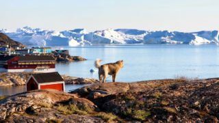 We were sitting on the patio in Ilulissat enjoying the view over the Disko Bay - and so did the dog.